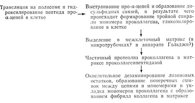 синтез коллагена. Схема